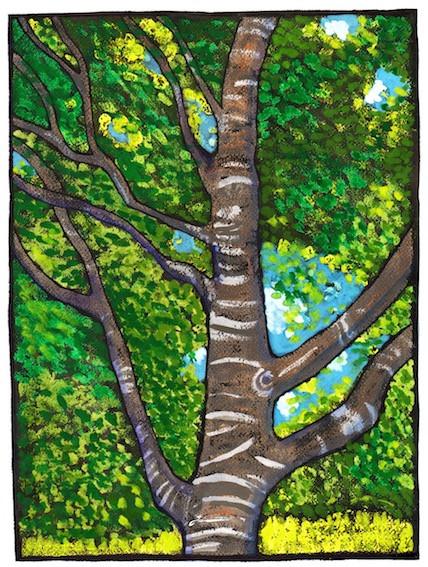 Coast Live Oak, endangered