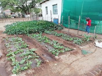 Gemüse_klein.jpg