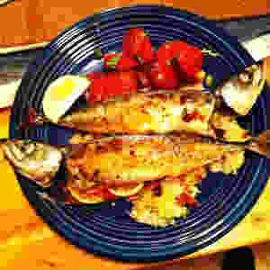 mackerel3.JPG
