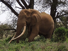 minjires & wildlife 1397.JPG