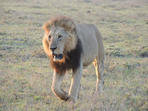 Masai Mara Camping - 3 days
