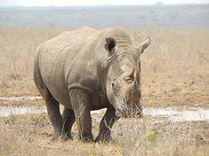 minjires & wildlife 267.JPG
