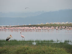 minjires & wildlife 772.JPG