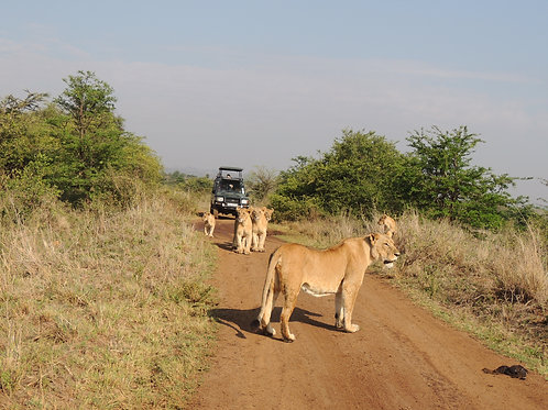 Masai Mara, Lake Nakuru, Samburu National Park and Sweetwater's - 7 Days