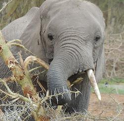 minjires & wildlife 186.JPG