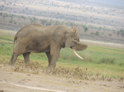 Amboseli National Park - Day trip