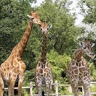 Zoo_de_la_flèche.jpg