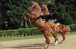 Pays des chevaux