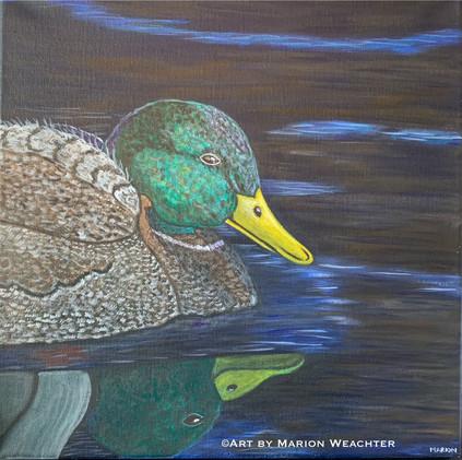 Mallard Duck_1
