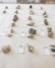 seashells-caoil--assistant.JPG