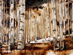 La forêt de bouleau