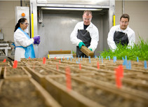 ARFID Awareness UK to be the official charity for Syngenta UK's Jealott's Hill site in 2020