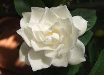 Gardenia & Jasmine Hand Milled Soap