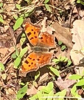 Orange Butterfly in Repose