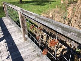 Lovelocks on the Footbridge