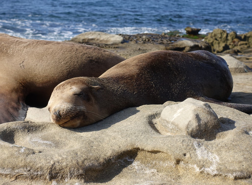 Natural Wonders of La Jolla Cove