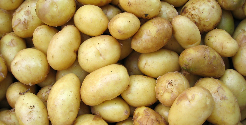 Russet Potatoes - 10lb bag