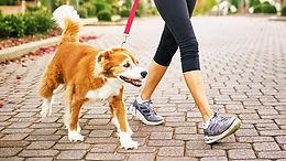 City & Guilds Level 2 Dog Walking