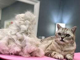Cat Grooming Taster Day
