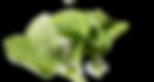 Canva - Closeup Photo of Mint_edited.png
