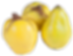 quince-2673421_960_720.png