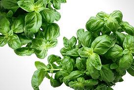 Canva - Green Leaf Plant (1).jpg