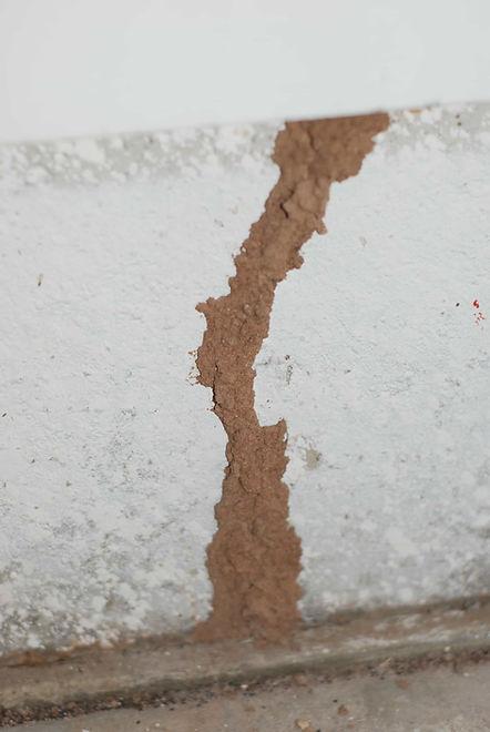 termite-shelter-tube.jpg