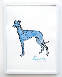 Greyhound Blue