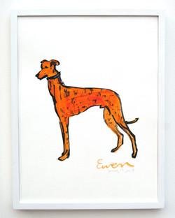 Greyhound Orange