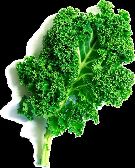 kale-leaf-silo.png