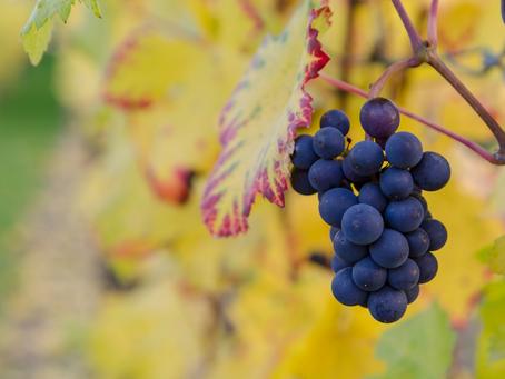 Hoe en waar is wijn ontstaan?
