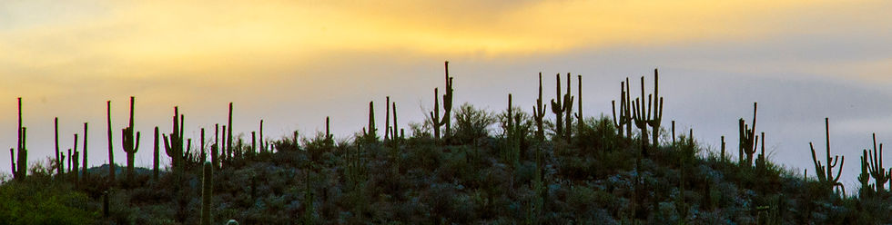Cactus-hill_background_Color.jpg
