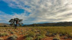 Landscape Natural Earth Safaris