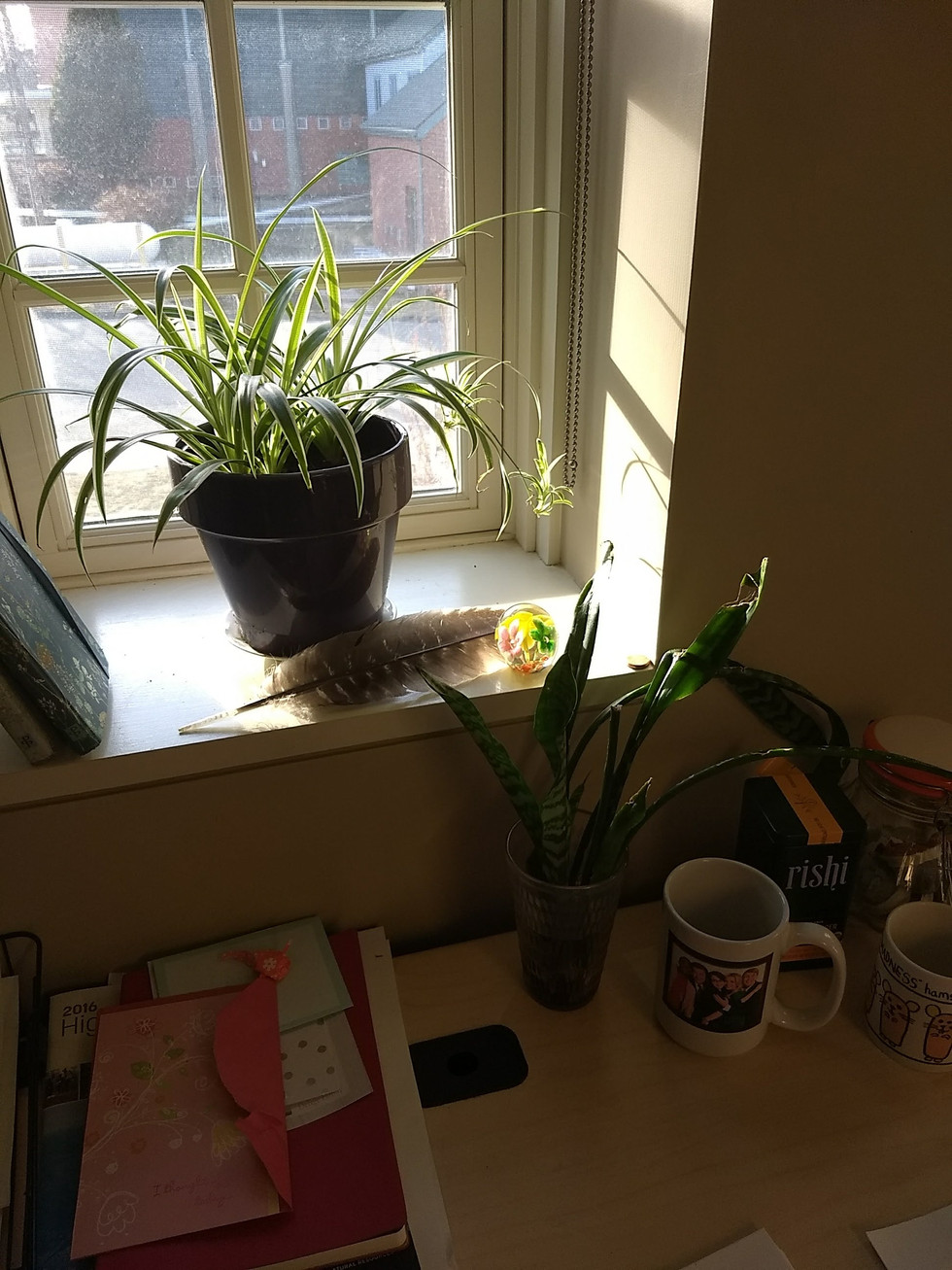 Full Circle-- with a Spider Plant