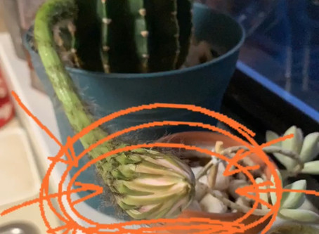Latent Cactus Surprise
