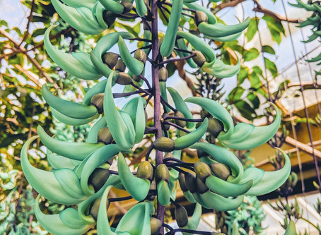 The Fake Plastic Jade Vine