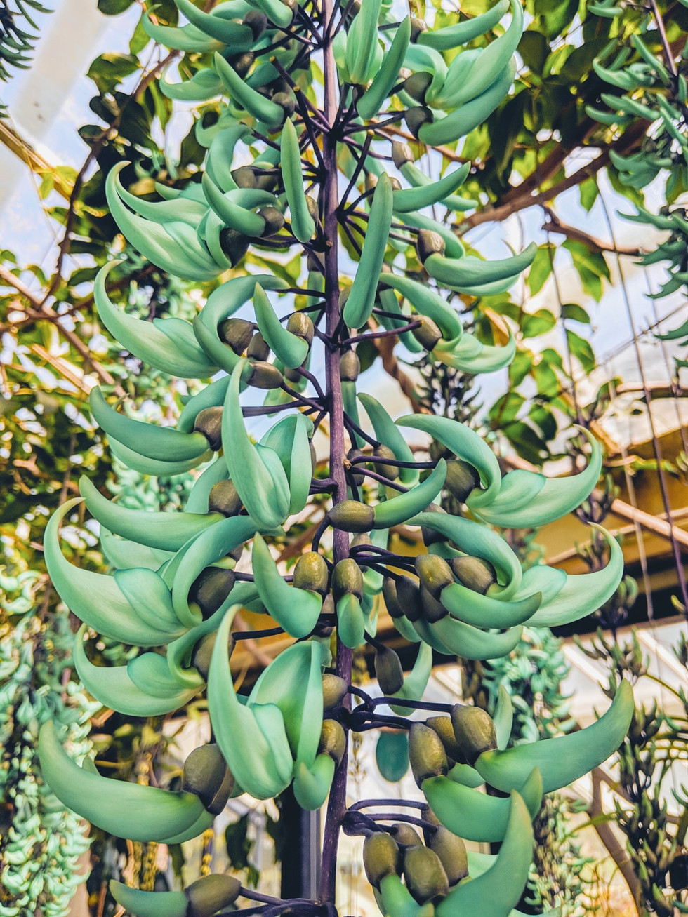 The Fake Plastic Jade Vine