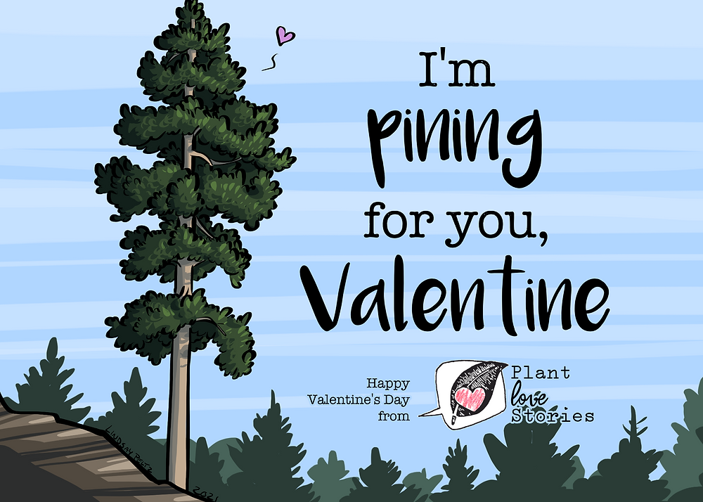 "Pine tree with a heart and the words ""I'm pining for you, valentine"""
