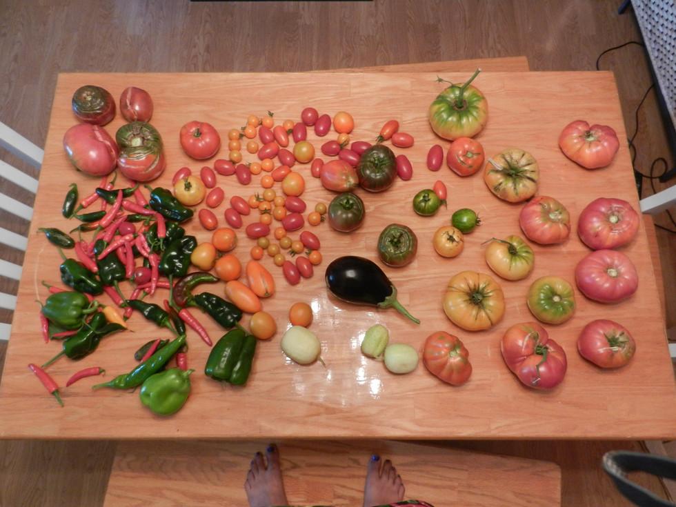 Tomato love story