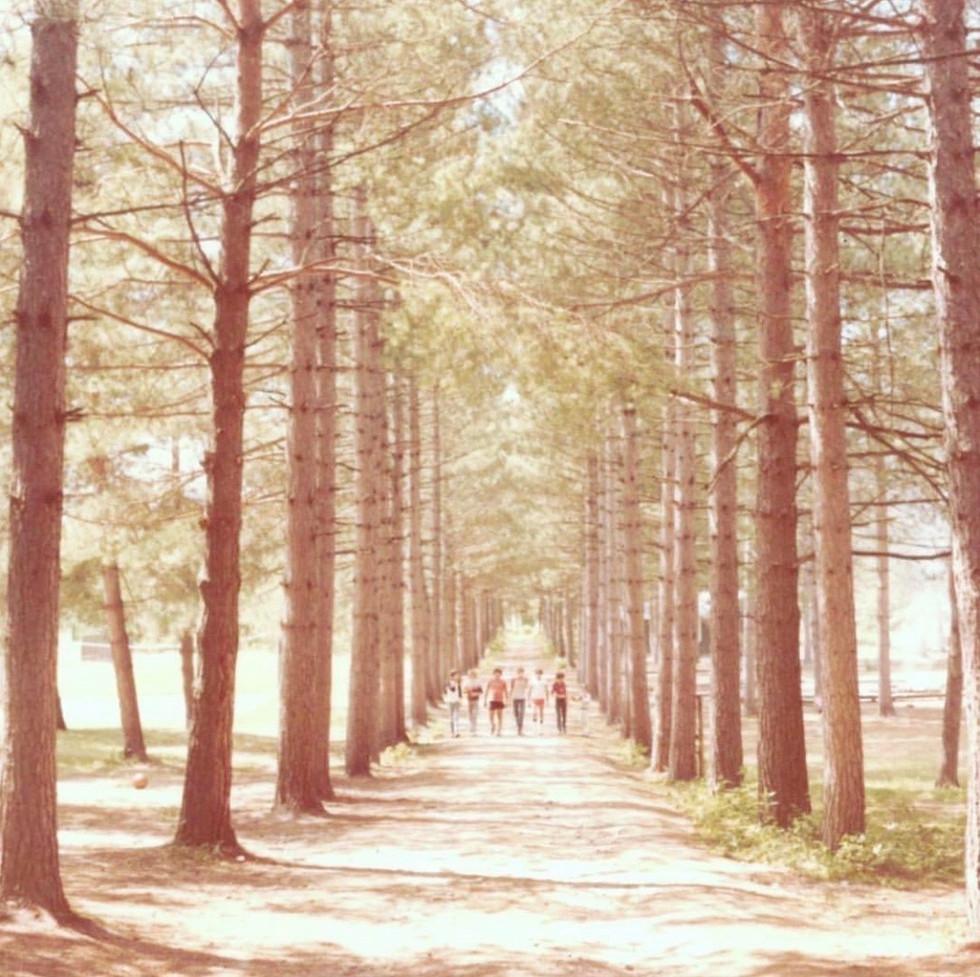 Overlook's Red Pines