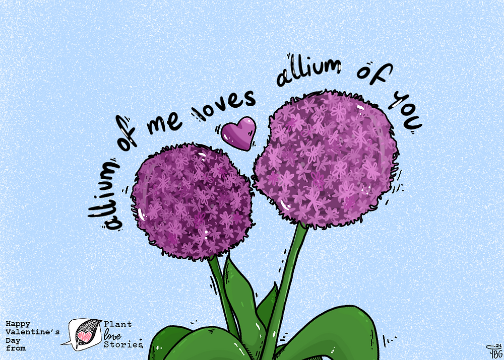"Illustration of two wild onion plants kissing with the words ""Allium of me loves allium of you"""