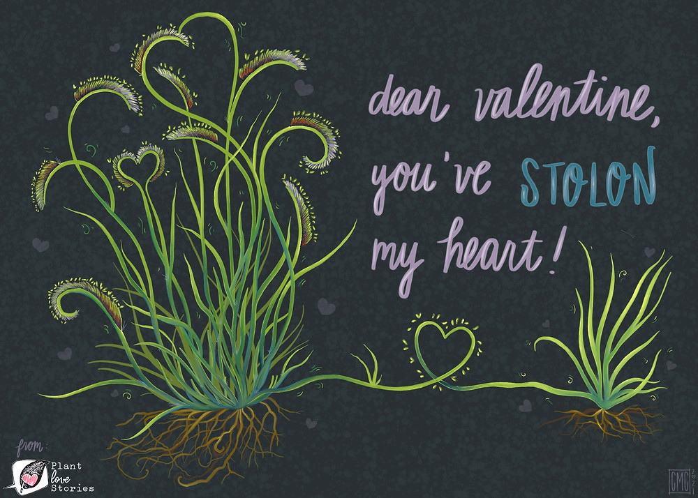 "Illustration of a grama grass with the words ""dear valentine, you have Stolon my heart"""