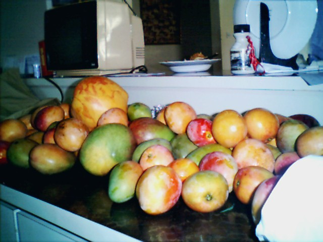35 pounds of mangoes!