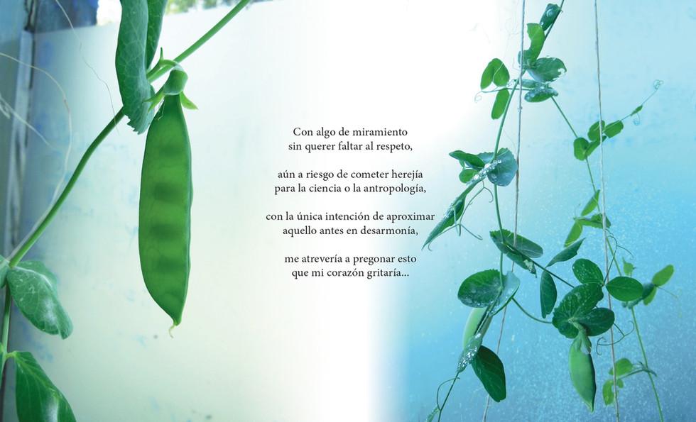 ALVERJAS (Pisum sativum)