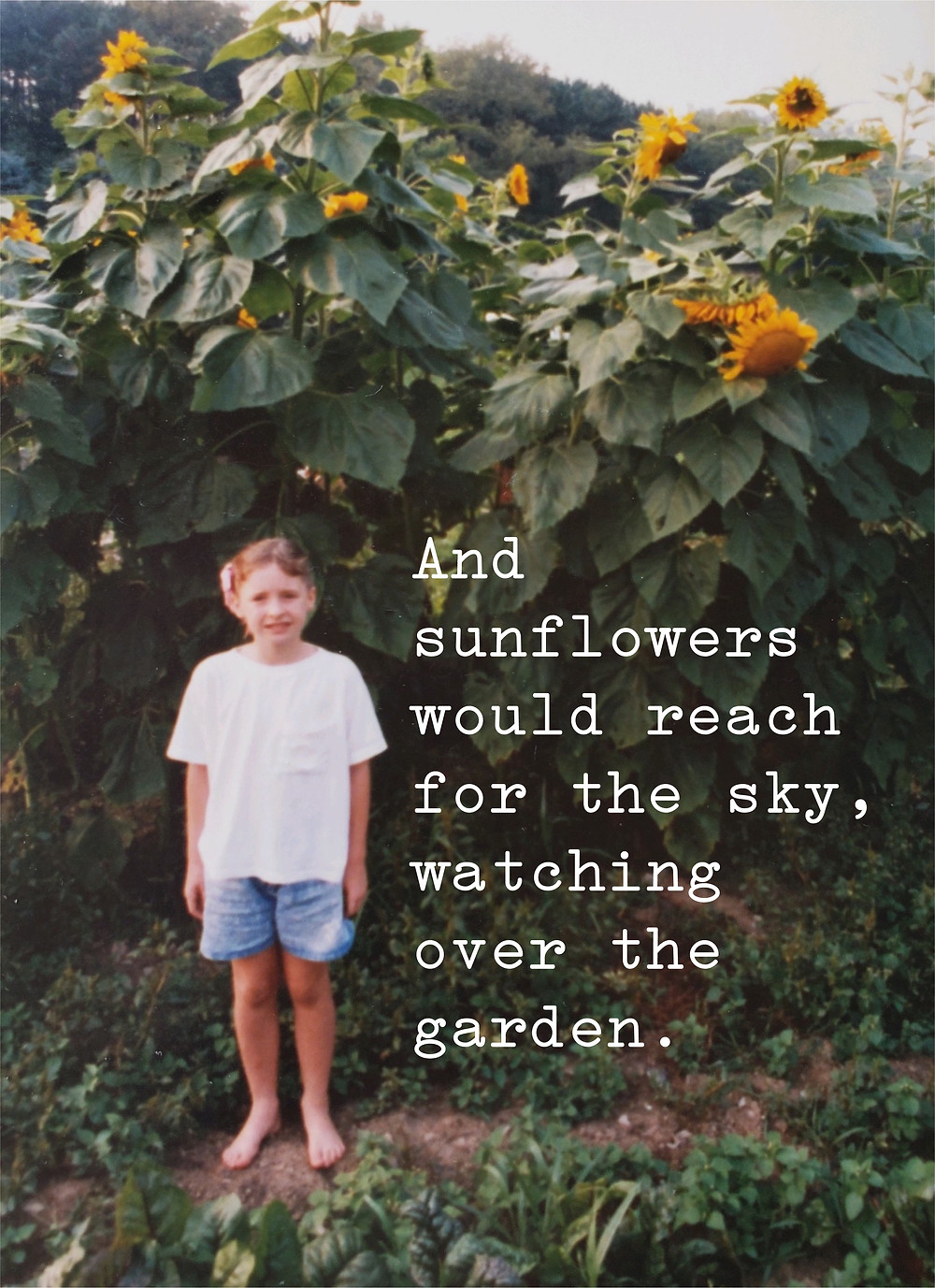 The author, age 6, and the towering sunflowers above and chard below. The hills of western Pennsylvania in the background.