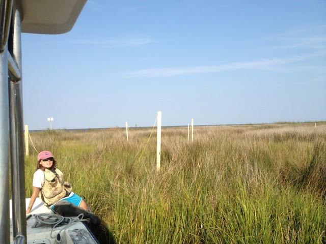 Lucy in a black needlerush marsh