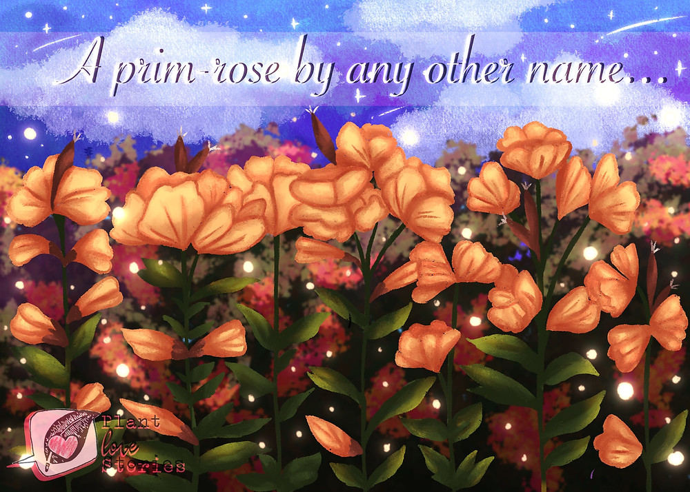 "Illustration of evening primrose against a night sky with the words ""a prim-rose by any other name"""