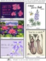 PlantHeartArt_Sheet2020A_small.png
