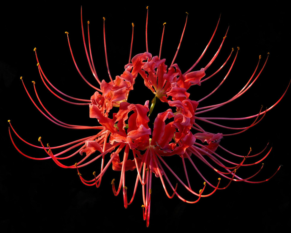 Bridge to Hell: Red Spider Lily