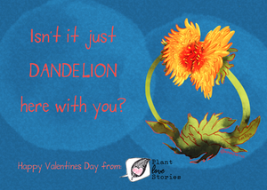 Isn't it just dandelion here with you? Happy valentine's day from Plant Love Stories! Illustration of Dandelions kissing